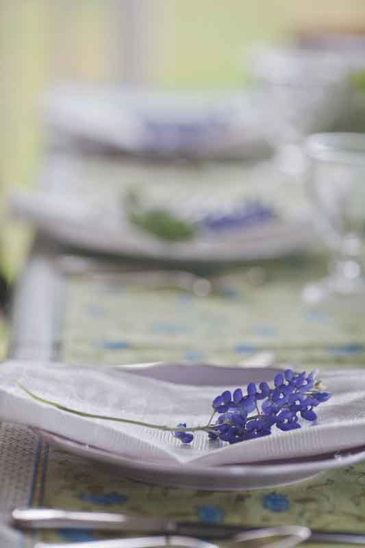 bluebonnets-and-linen