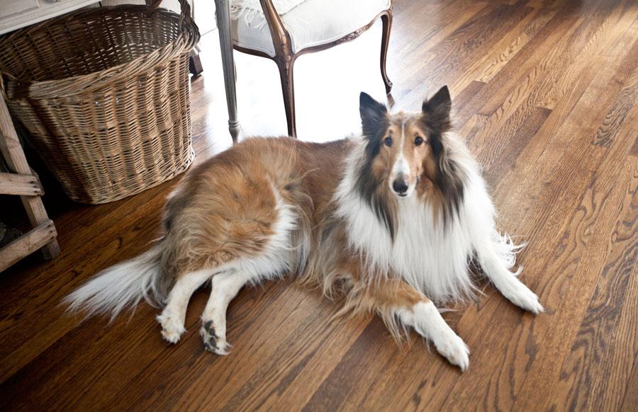 collie-wood-floors