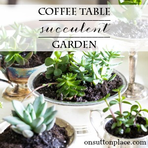 diy coffee table succulent garden