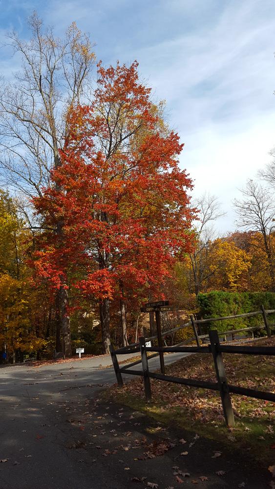 thanksgiving-cedar-hill-farmhouse-mountains-11