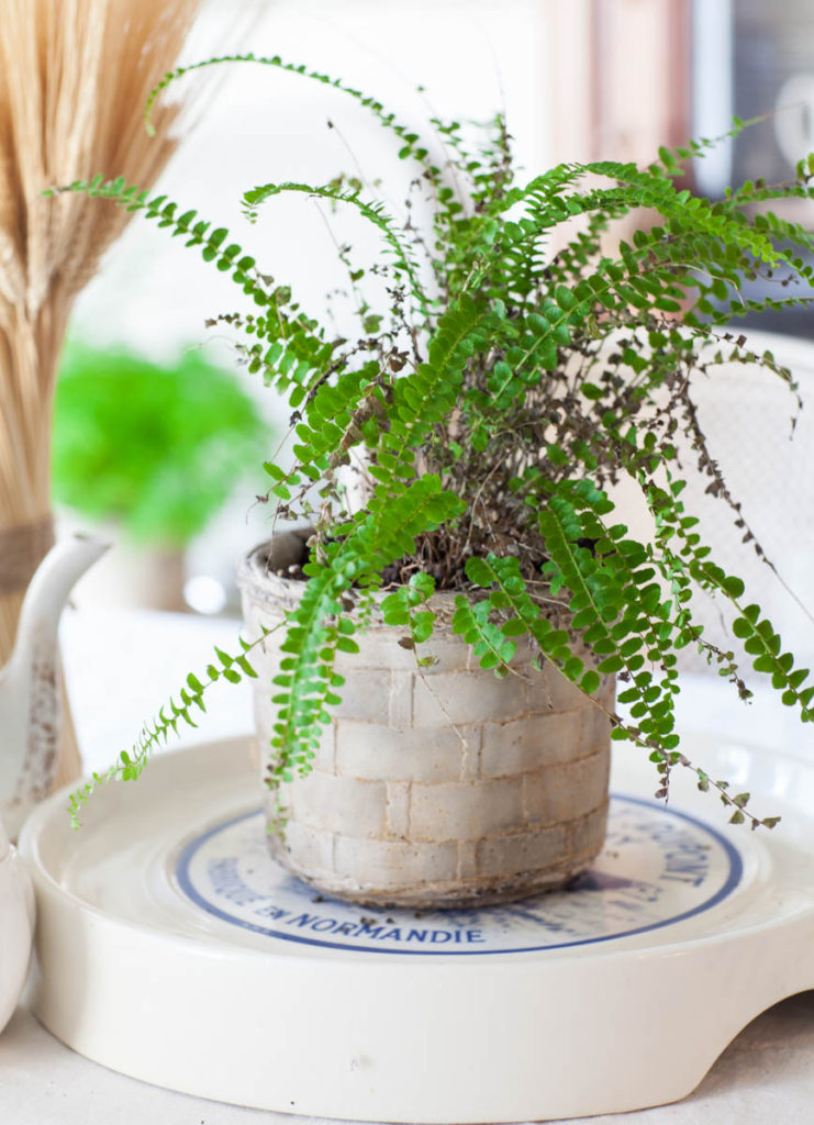 decorating details greenery